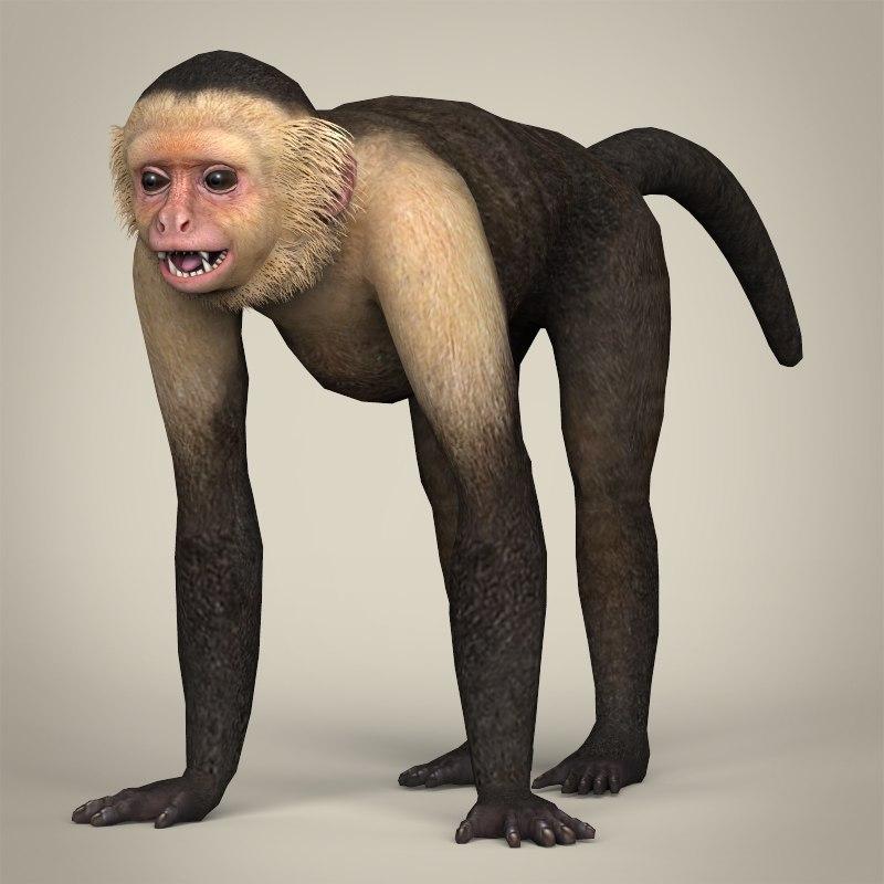 realistic capuchin monkey 3d model