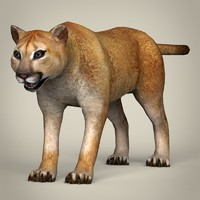 3d model realistic mountain lion
