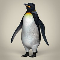 3d model realistic penguin