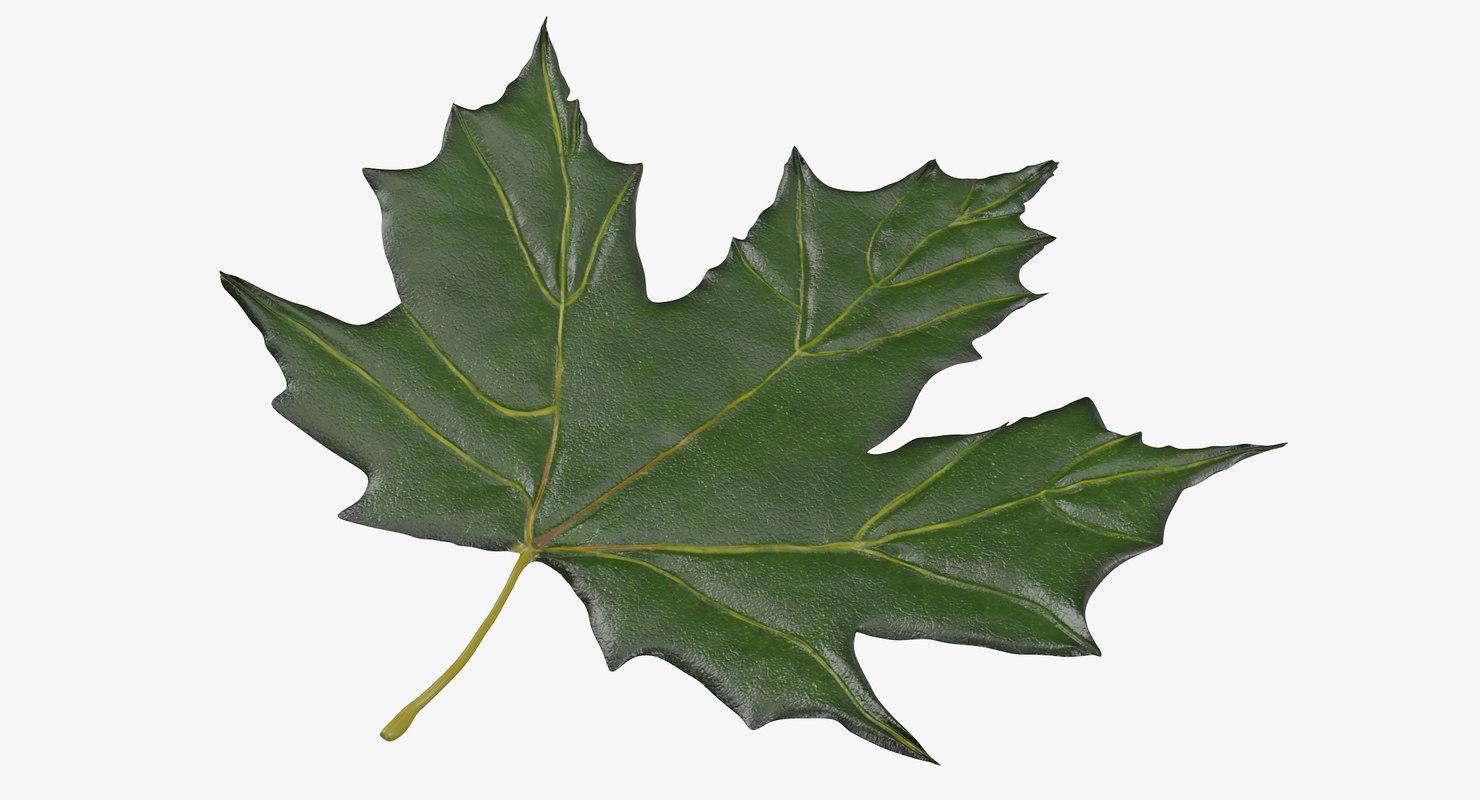 green maple leaf max