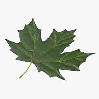 green maple leaf max