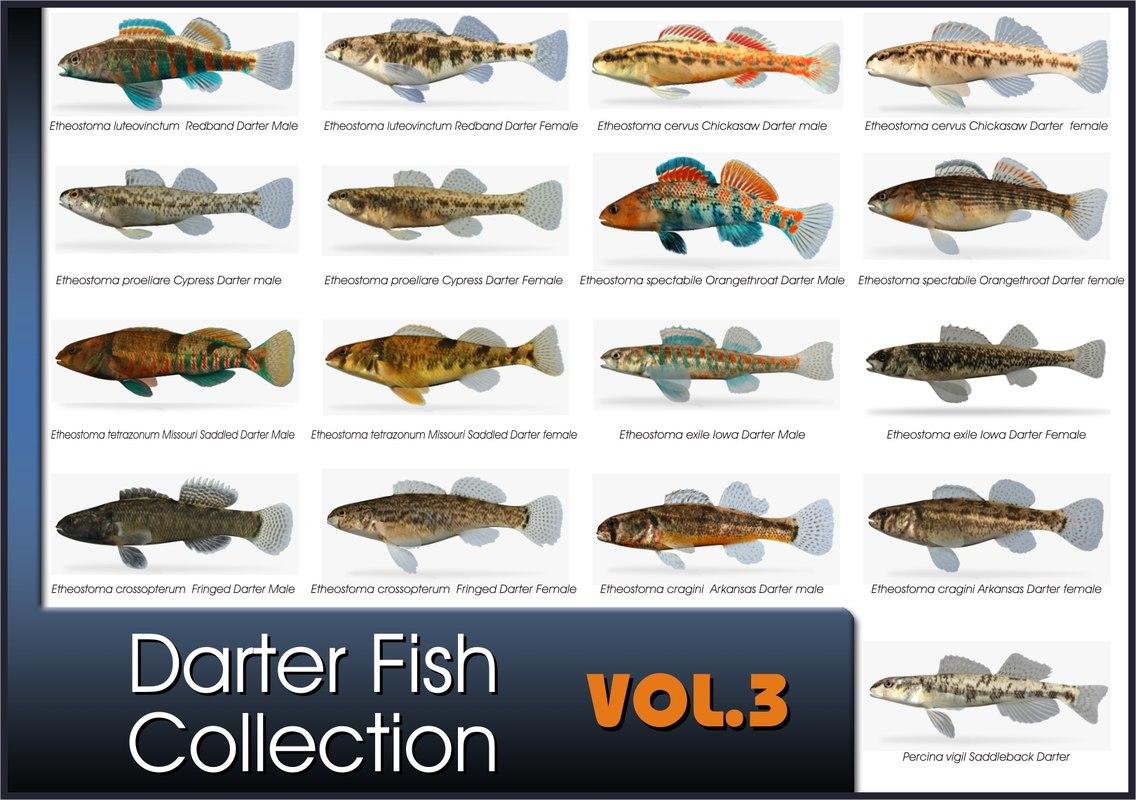 darter fish x