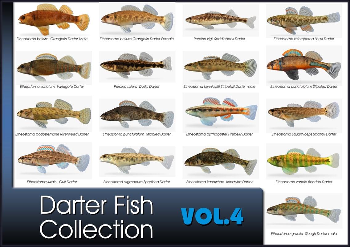 darter fish 3d fbx