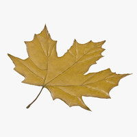 obj yellow maple leaf