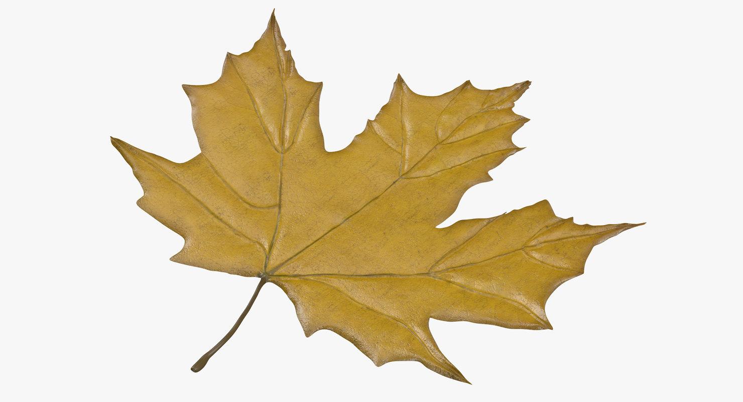 obj yellow maple leaf