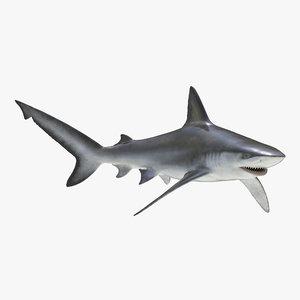 max bignose shark rigged