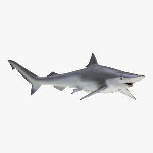 3d model spadenose shark rigged