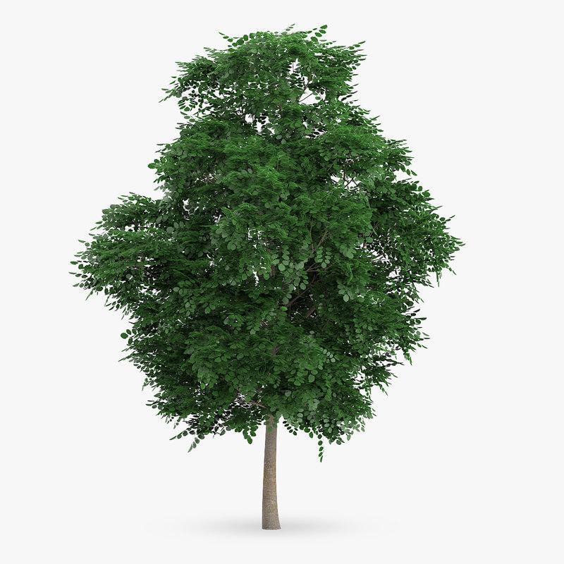 swedish whitebeam tree 8 3d model