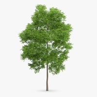 wild service tree 11 max