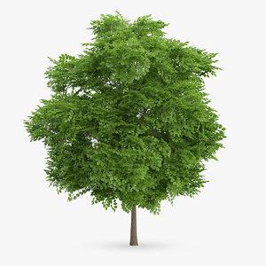 wild service tree 6 3d model