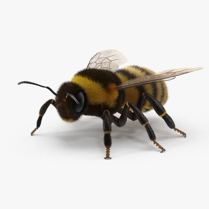 bumblebee bumble bee 3d model