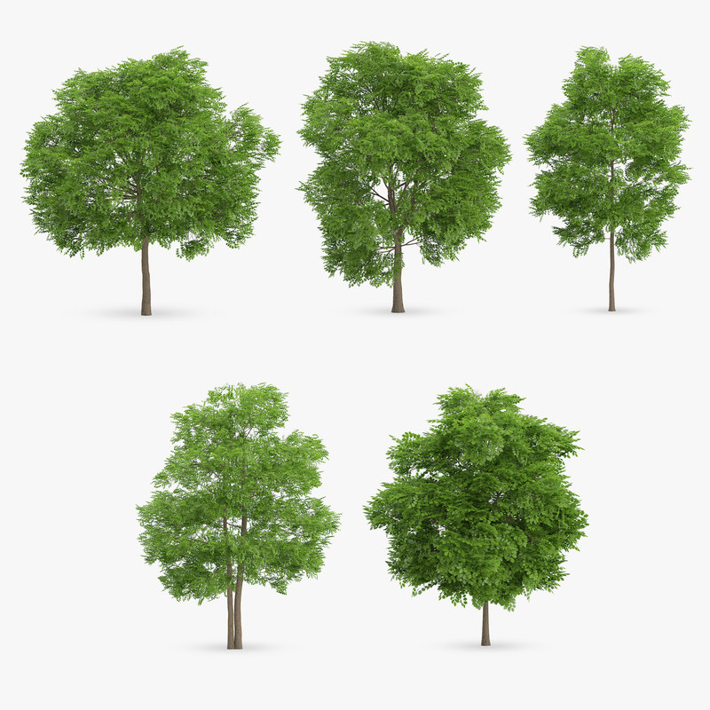 wild service trees 3d max