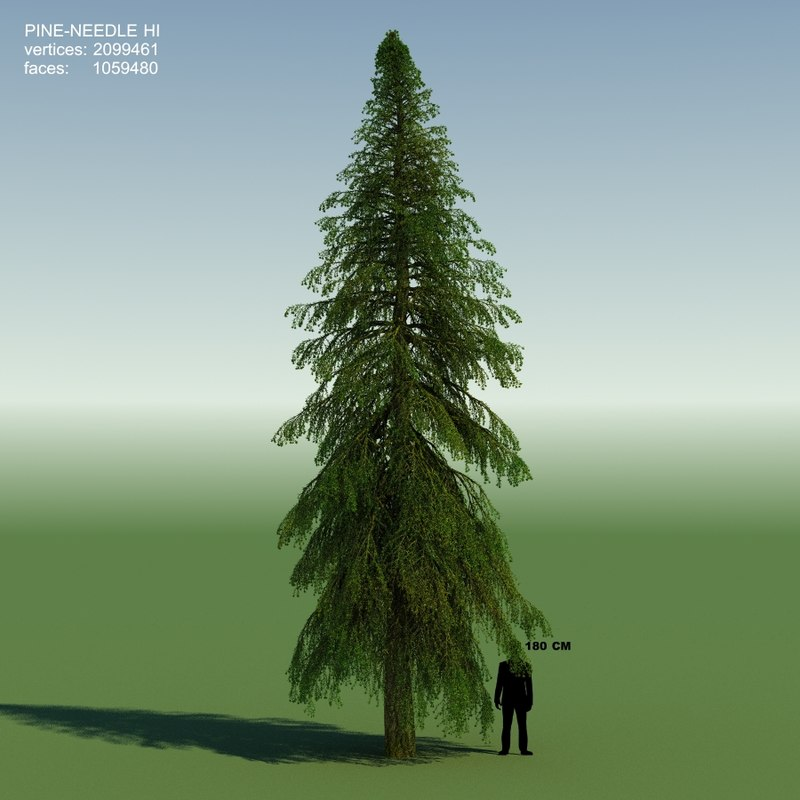 conifer cedrus tree 3d obj