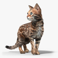 Bengal cat(2)(FUR)(ANIMATED)