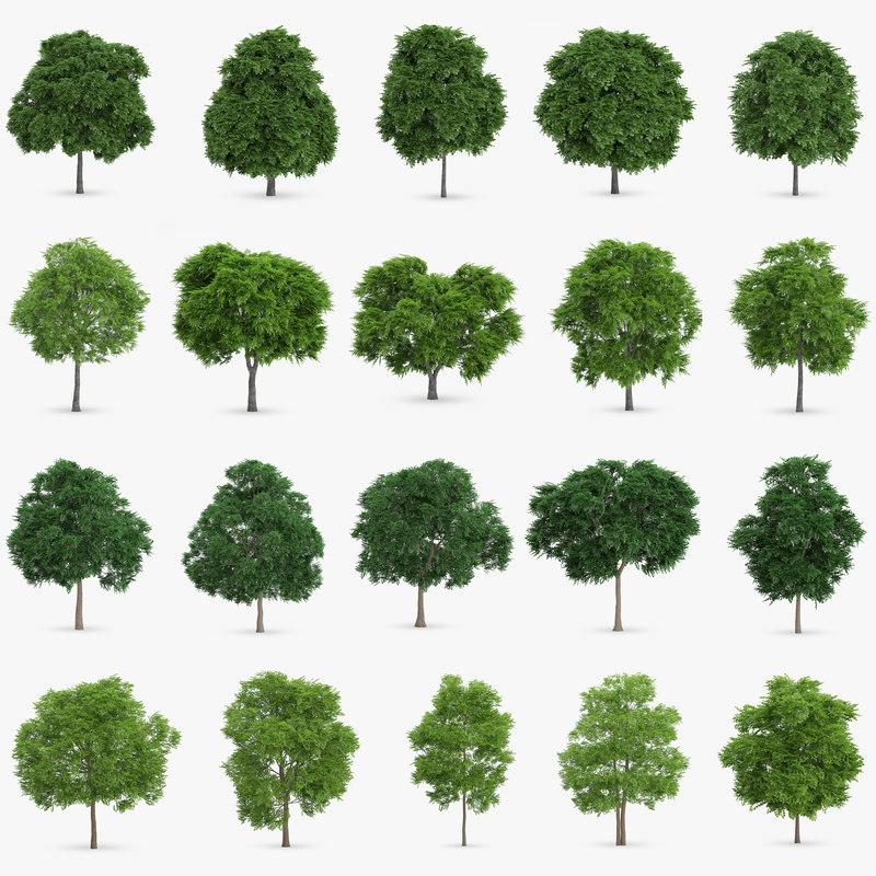max 20 sorbus trees