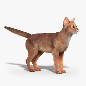abyssinian cat fur 3d max