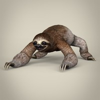 Low Poly Realistic Sloth