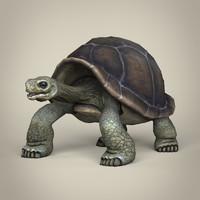 realistic tortoise 3d model