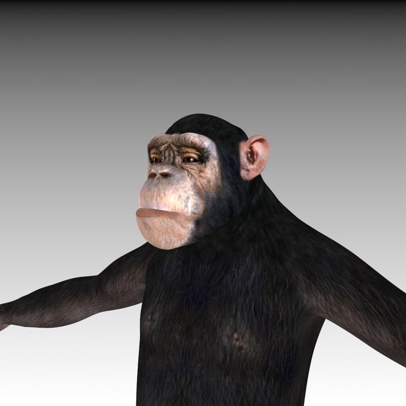 3d chimpanzee facial morph model
