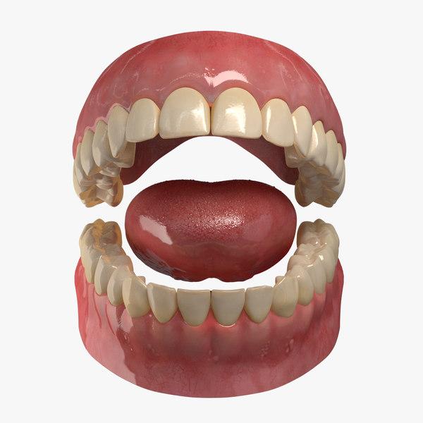 max realistic teeth gums tongue