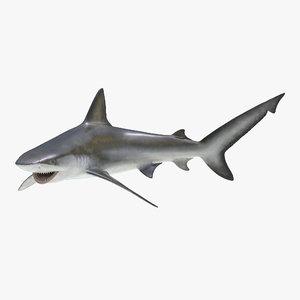 bignose shark pose 2 3d fbx