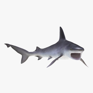 sandbar shark rigged 3d max