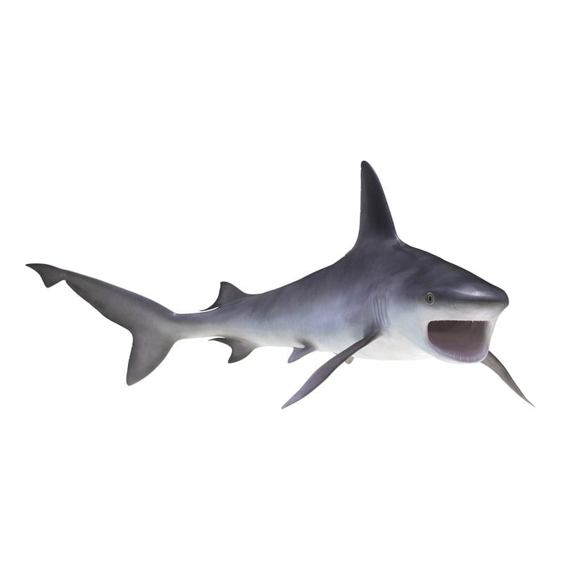 sandbar shark rigged 3d max