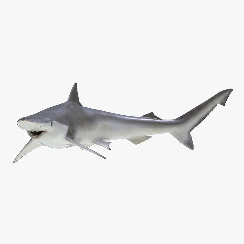 3d model spadenose shark pose 2