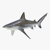 bignose shark c4d