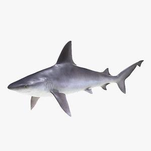 sandbar shark max