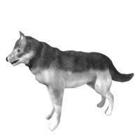 free wolf l 3d model