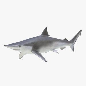 3d spadenose shark model