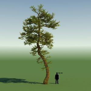 pine tree max