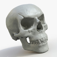 fossilized human skull printing 3d model