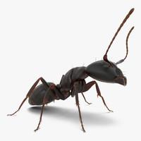 3d black ant fur pose