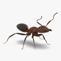 Red Ant Rigged