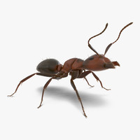 3d red ant fur rigged model