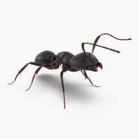 3d model black ant rigged