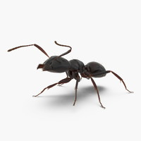 Black Ant with Fur Rigged 3D Model