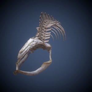 whale skeleton 3d x