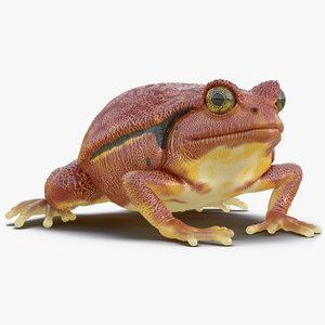 3d tomato frog pose 2 model