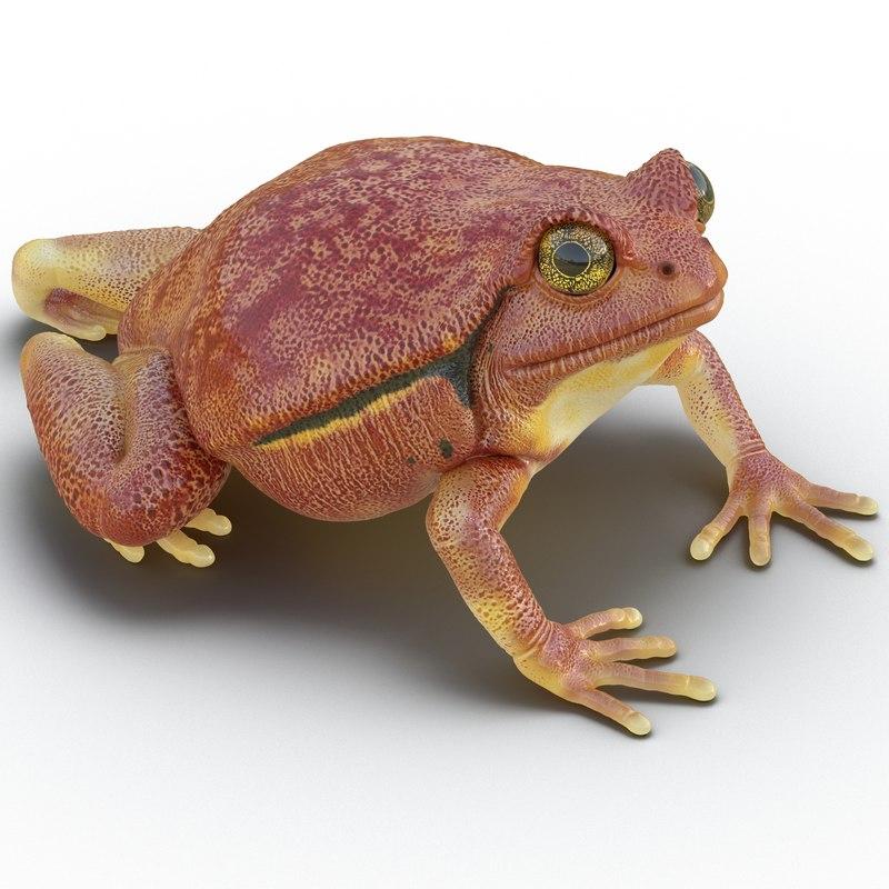 tomato frog pose 4 3d max