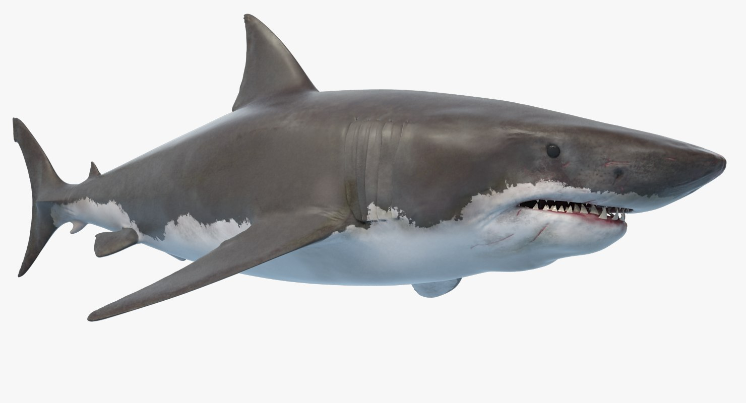 great white shark ocean animation max