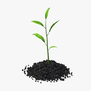 3d model small plant sprout