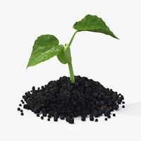 3d plant seedling