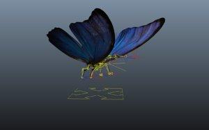 ma blue butterfly