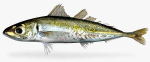 3d jack mackerel