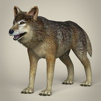 Low Poly Realistic Wolf