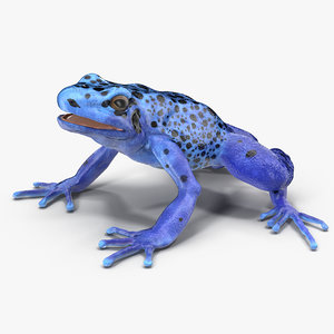 3d poison dart frog blue