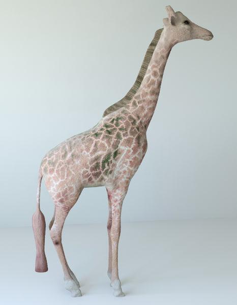 giraffes unwrapped 3d max